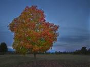 Tree Piedmont Center