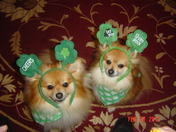 """Irish Poms"""