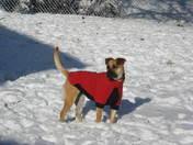 Belle's 1st snow