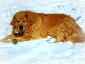 rudy in the snow.jpg