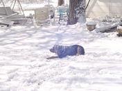 march snow 013.JPG