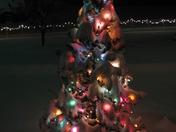 My Outside Christmas Tree