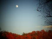 Full Moon/ Fall Foliage