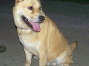 Lost Dog Smokey Lane Hamptonville NC