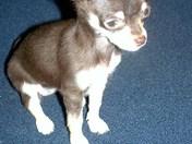 pet picture mookie & chloe 11-23-08 017.JPG