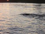Gary Sredszienski's Swim for Whaleback Lighthouse