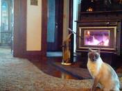 Beau getting warm