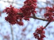 Spring @ Greenwood Park