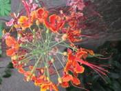 Nature's Medicine Wheel