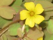 Botanical Spring Flowers
