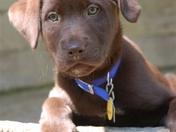 BABY GATOR DOG