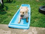 Junior's pool