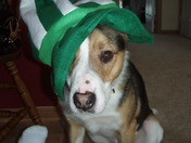 St. Paddy's Day 011.jpg