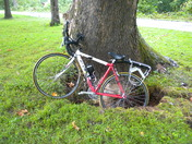 nature's bike rack