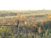 Fenceline Foliage