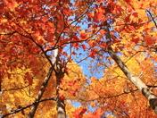 Cherry Glen Color