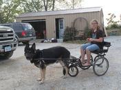 cart ,  Big dog fun