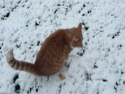 Simba's first snow