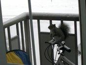 Petey the Squirrel