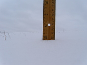 Snow Total in Springfield, Ky. Today