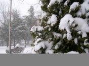 simba winter 2010 007.JPG