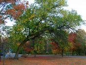v8 tree.jpg