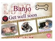 Dear Banjo get well soon