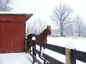 Horse like the snow!!