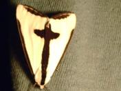 holy moth?