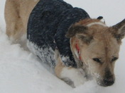 bachman playing in the snow.JPG
