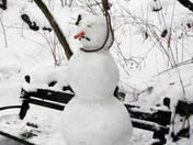 Tired_of_Snow.jpg
