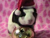 Christmas Hampster