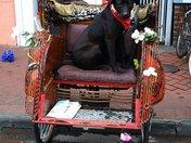 dogchair.jpg