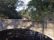 Audubon Park - Jan. 31