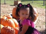 Skyar picking out pumpkins