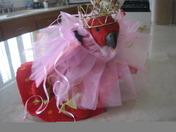 Eclectus Princess