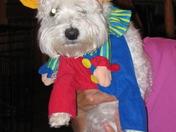 Max during Mardi Gras