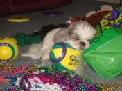 Mardi Gras Party Animal