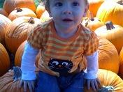 Macey Ella at the pumpkin patch