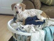 helping do laundry