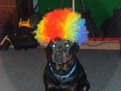 Judah Clown