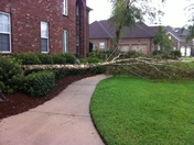 wind gust takes down tree