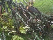 tree branches came down after storm yesterday