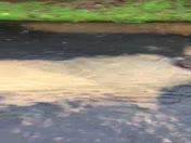 sewerage overflow