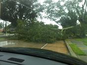 huge split oak... already