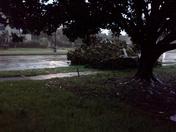 Krystal sending part of tree fell next door