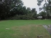Vaughn family pecan tree