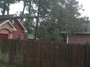Pearl River tree on shed/house