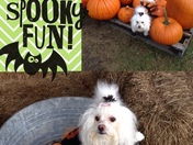 Sophie at the Pumpkin Patch