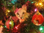 Kitten caught in the act